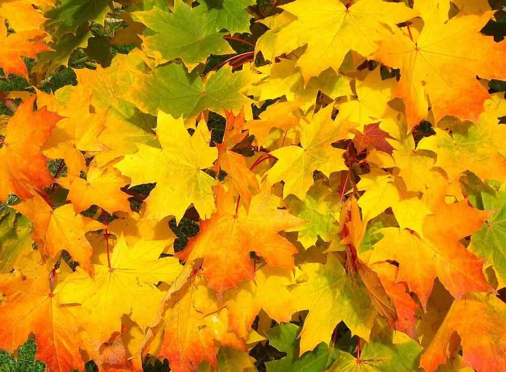 Buntes-Herbstlaub-fällt-nun-von-den-Bäumen_ferienwohnung-schlitz.de